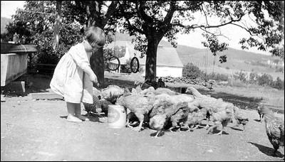 1922_chickens.jpg